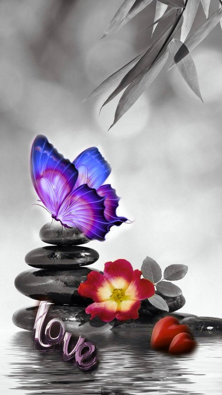 Love stones with butterfly